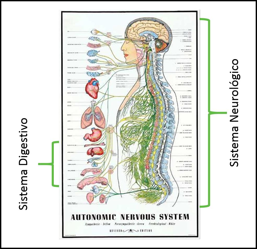 condiciones digestivas quiropractico san juan