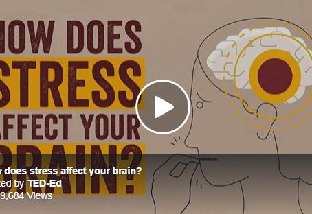 Cómo el Estrés Afecta al  Cerebro