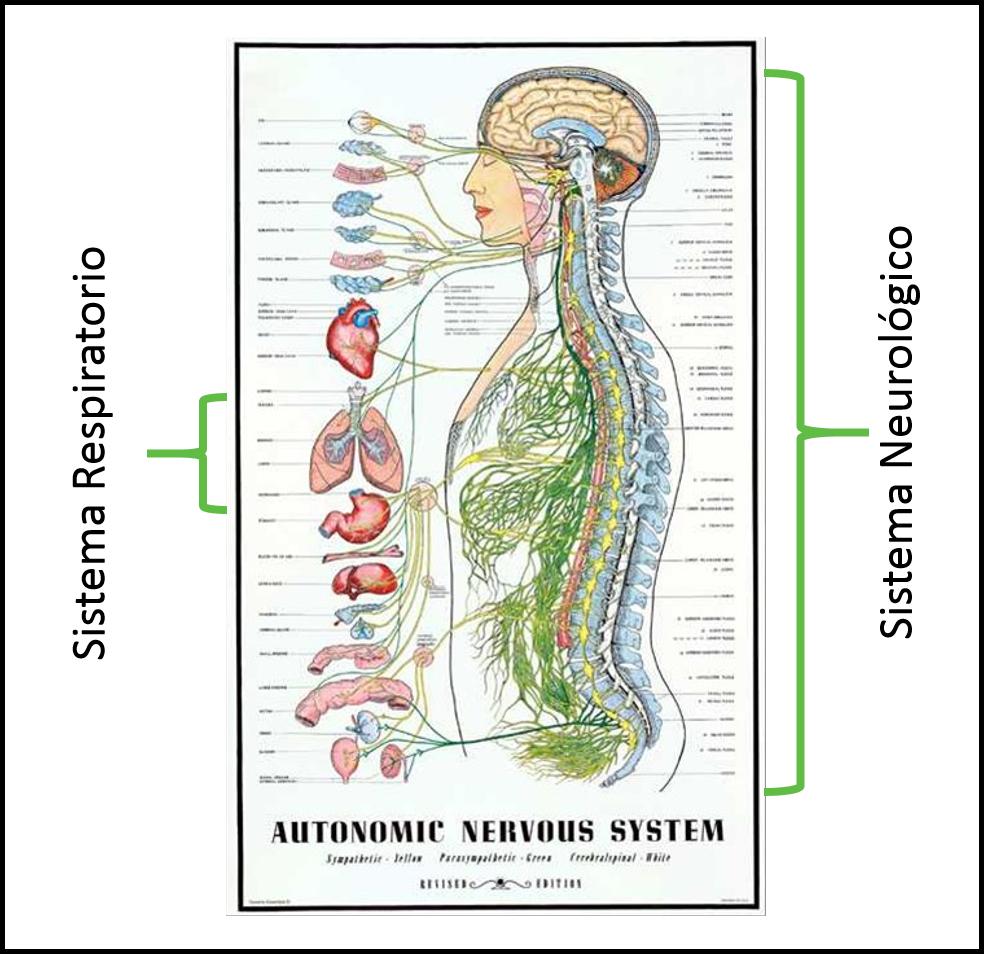 asma quiropractico san juan
