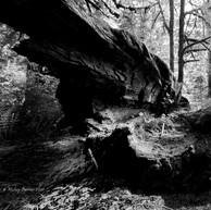 Untitled.downtree (digital).jpg