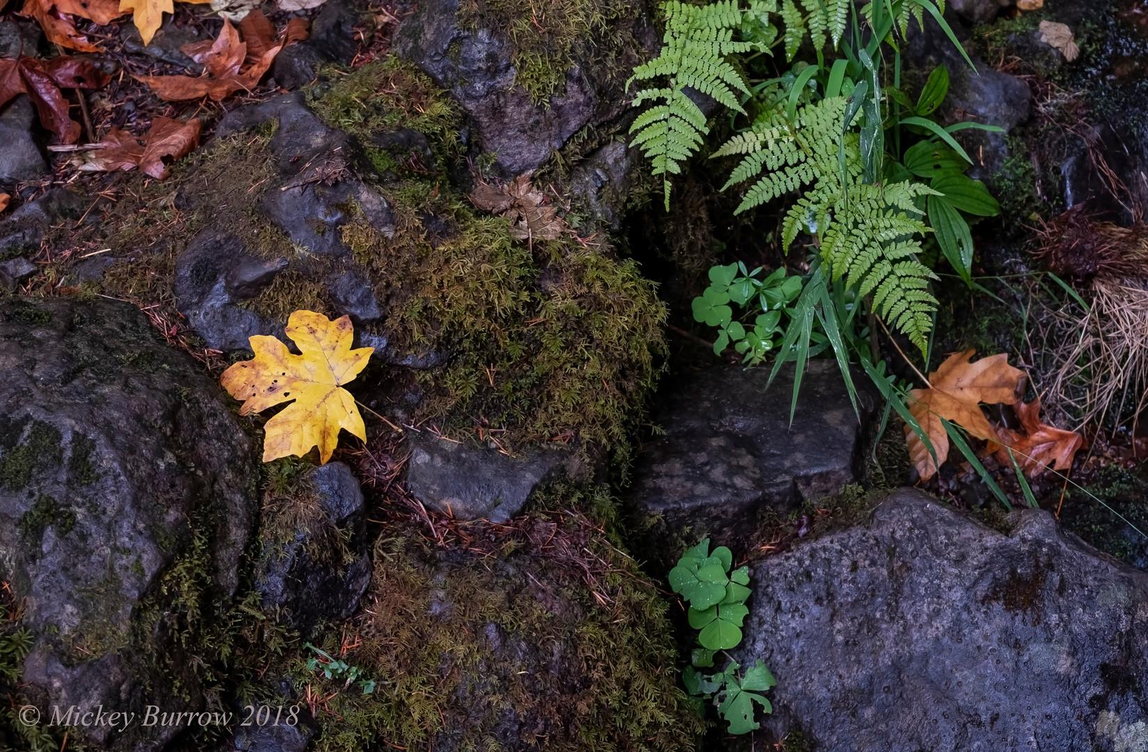 Fall Colors After Rain.digital.jpg