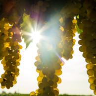 Time for Harvest (digital).jpg