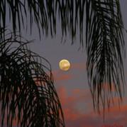 moon tree(i).jpg