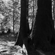 Darkside of Trees (digital).jpg