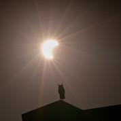 OwlEclipse.JPEG