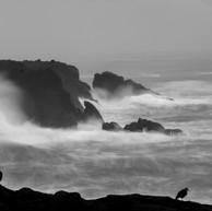 Piper at Boiler Bay (digital).jpg