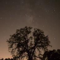 Star Tree(i).jpg