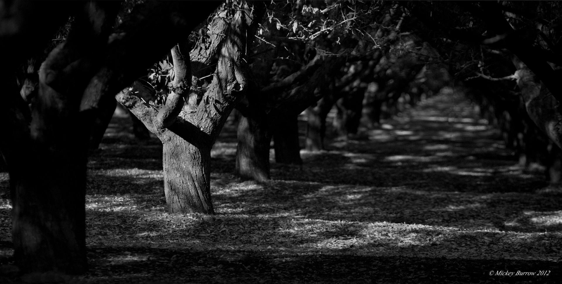shadow trees.jpg