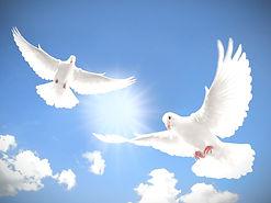 doves_edited_edited.jpg