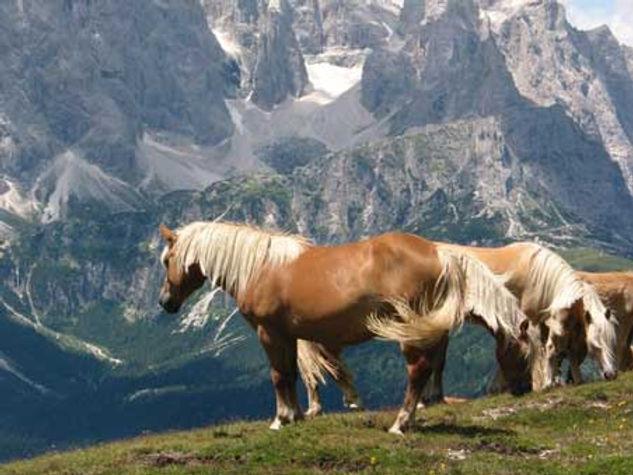 cavalli-in-montagne-del-comelico.jpg