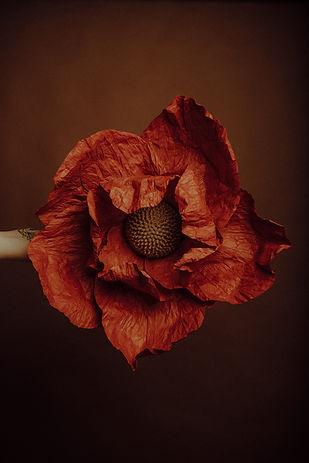 Fleur Géante taille L