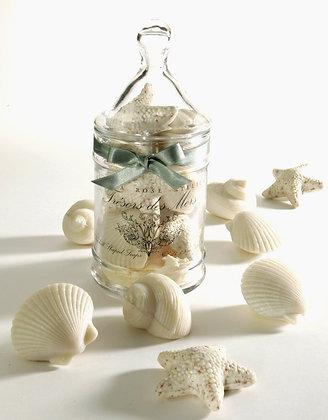 Natural Seashell Jar Soaps