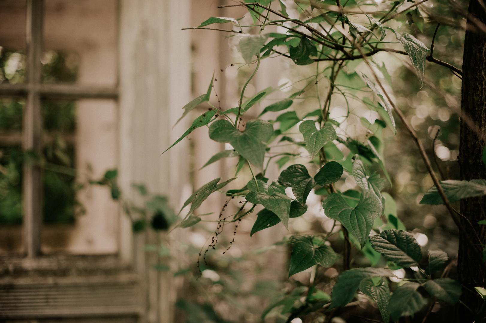 photographe - Céline Déligey