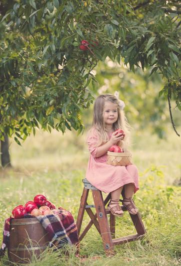 Nolen Apple Minis Kari Bendig Photograph