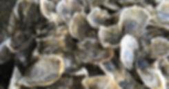 money-island-gandys-beach-oyster-shells-
