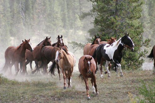 Scattered Montana Horses