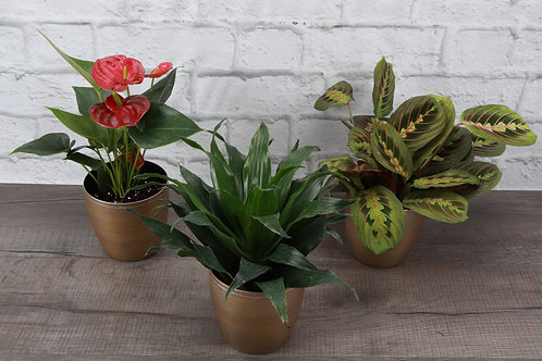 Colorful Holiday Plant Set