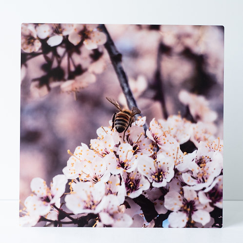 Bee on Bloom, photograph on metal