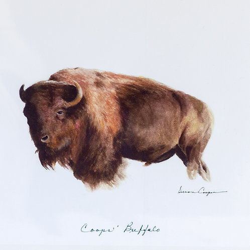 Coops' Buffalo