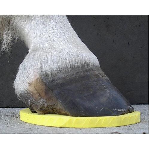8# Yellow Pad – Laminitis & Abscesses