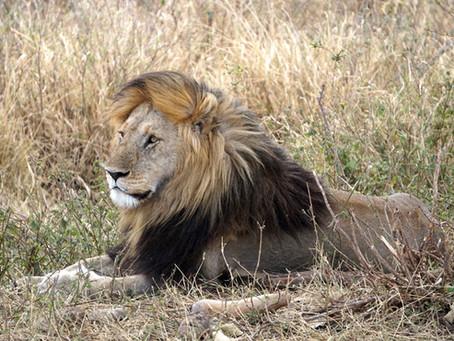 On Safari ...