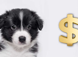 how-much-does-a-dog-cost-HP-long.jpg