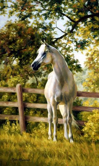 white-horse-Lynn Maderich