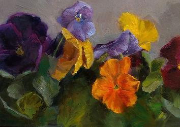 Pansies - Amber Titabaugh