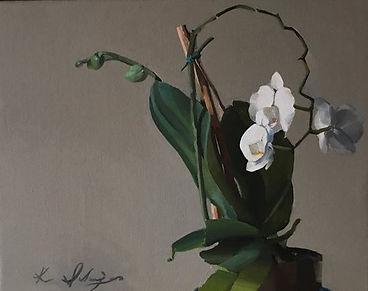Orchid - Kenny Schweiger