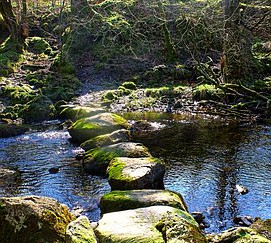 The stepping stones of choice