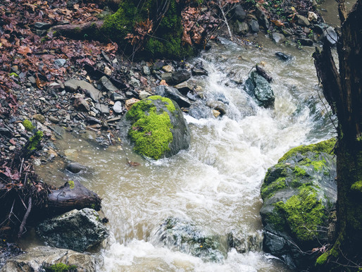 Discovering Wild Coyote Creek