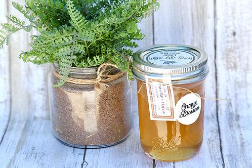 10 oz Orange Blossom Honey