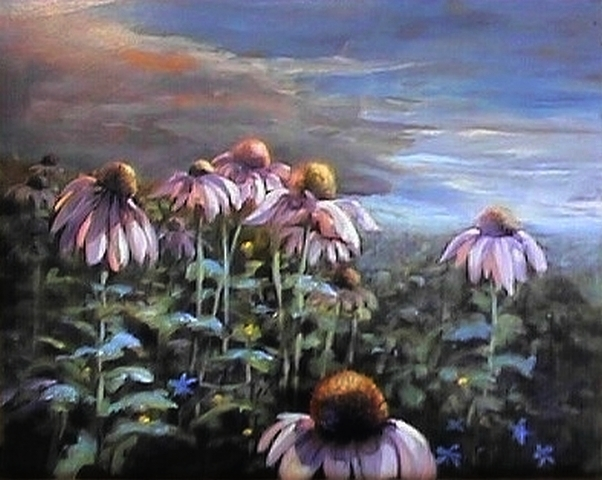 echinacea morning