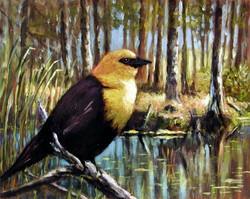 Yellow Black Bird