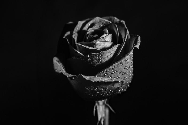 la-vie-en-rose