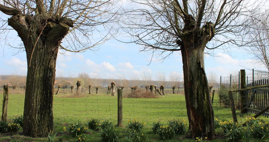 Het weidse West-Vlaamse platteland.