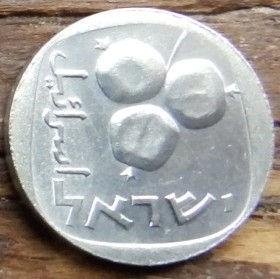 5 Агорот, 1977 года, Израиль, Монета, Монеты, 5 Agorot 1977, Israel, Flora, Pomegranate fruit, Флора, Плоды граната на монете.