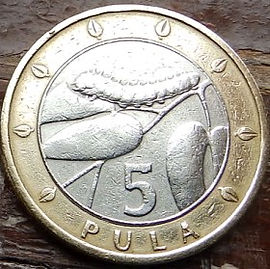5 Пула, 2000 года, Ботсвана,Монета, Монеты, 5 Pula2000, Botswana,Fauna, Peacock butterfly caterpillar on the Mopan tree,Фауна, Гусеница бабочки павлиноглазка на дереве Мопан на монете, Coat of arms of Botswana,Герб Ботсванына монете.
