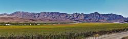 Aussenkeur Winelands, Namibia