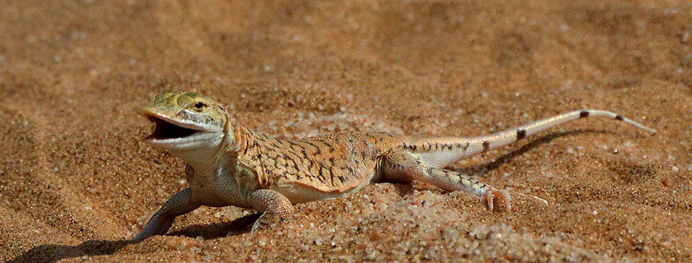 Living Desert Tour, Swakopmund, Namibia