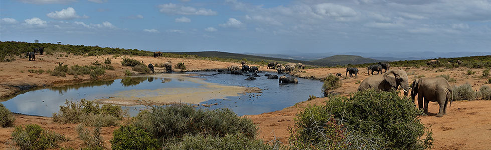 Guided & GPS Motorcycle Tours to Addo Elephant Park