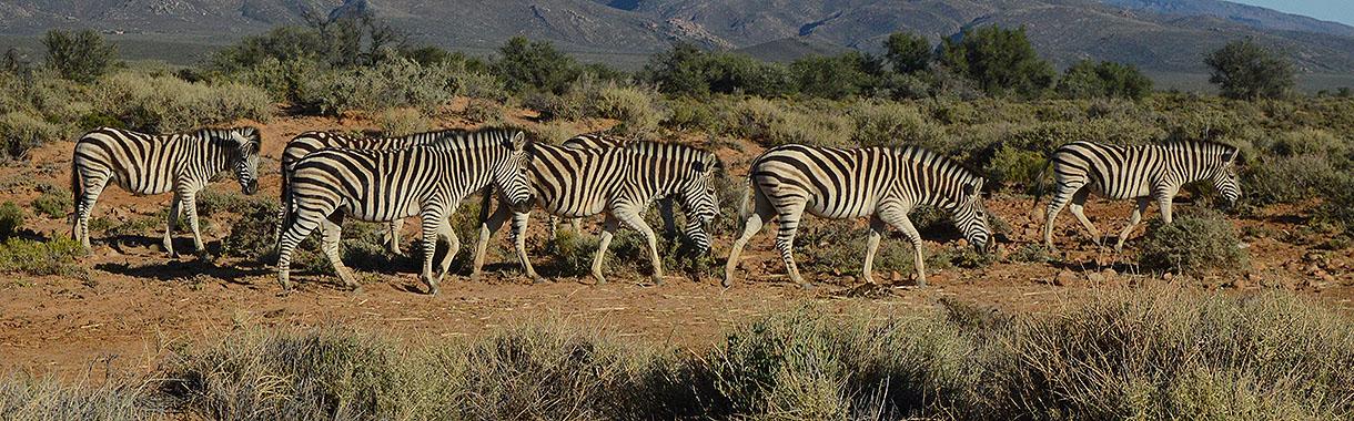 Zerba, Botswana