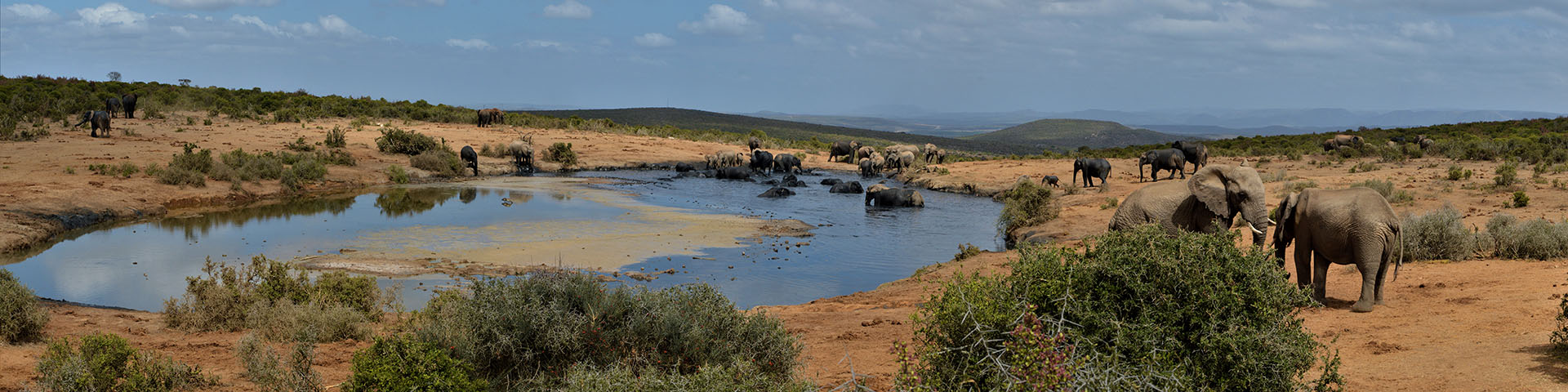 Abundance of Wildlife Encounters