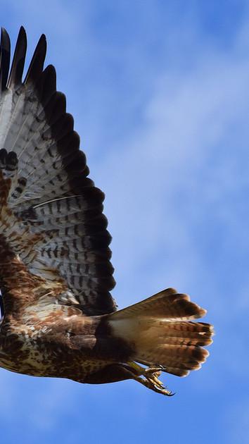 Birdlife in Swartberg Pass