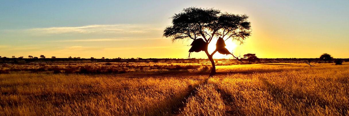 Weavers Nests, Namibia