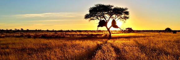 Weaver Birds nest, Namibia