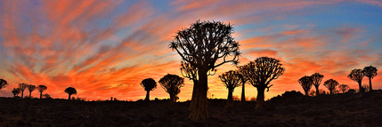 Quivertree Forest, Namibia