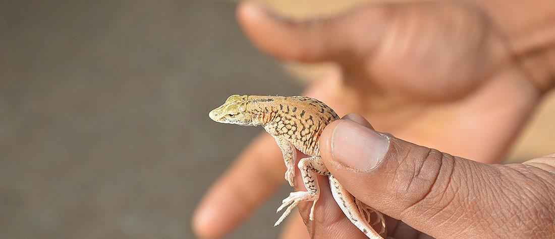 Living Desert, Namibia