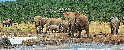 Triumph Motorcycle Tours Garden Route & Addo Elephant Park