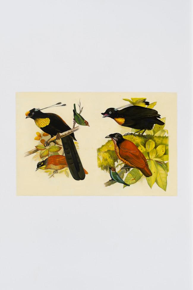 Birdcall, 2018